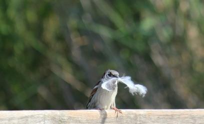 oiseau-plume